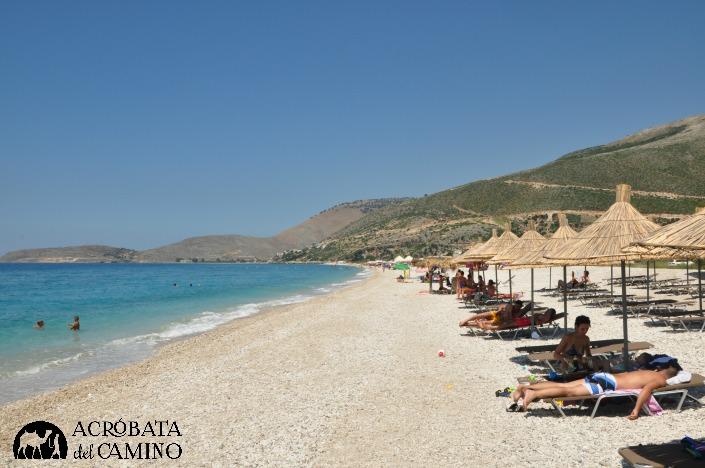 platas de albania