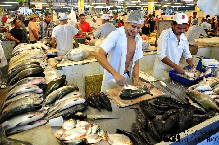 mercado de pescado de manaos