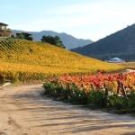 La ruta del vino en Chile y sus místicas consecuencias