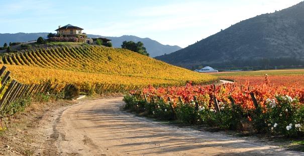 ruta del vino chile