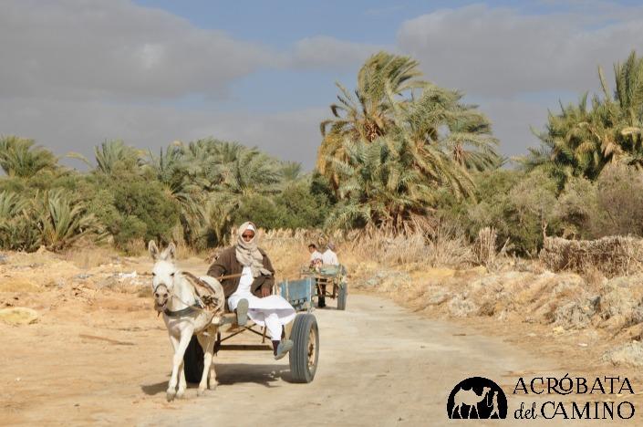 donkey carts siwa