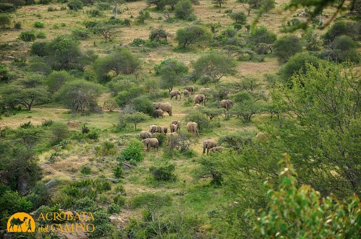 mandada de elefantes