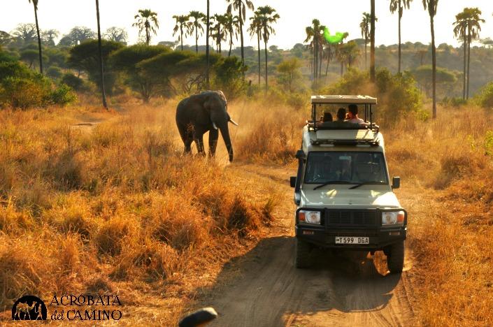 elefantes-tanzania