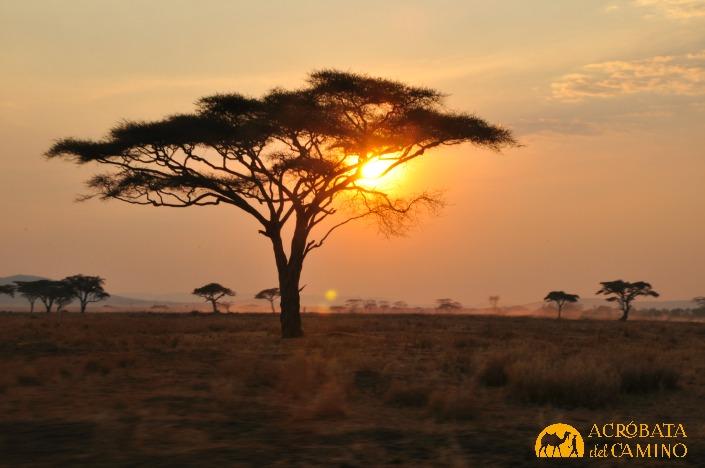 atardecer africa