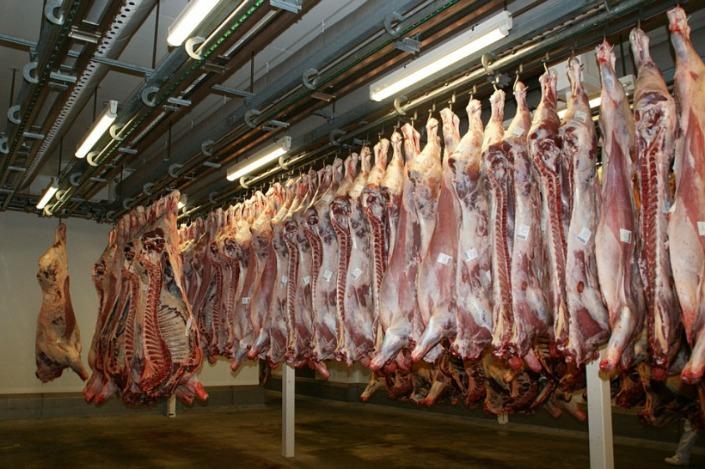 vacas colgando en matadero