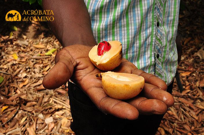 tour de las especias en zanzibar