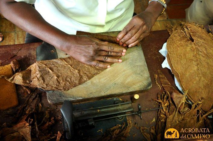 mujer enrrollando hojas de tabaco en real fabrica de tabacos partagas
