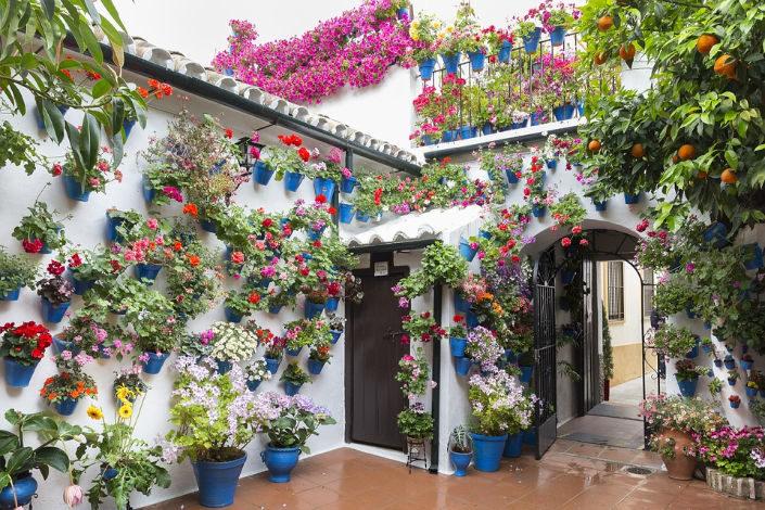 patios de córdoba con macetas repletas de flores